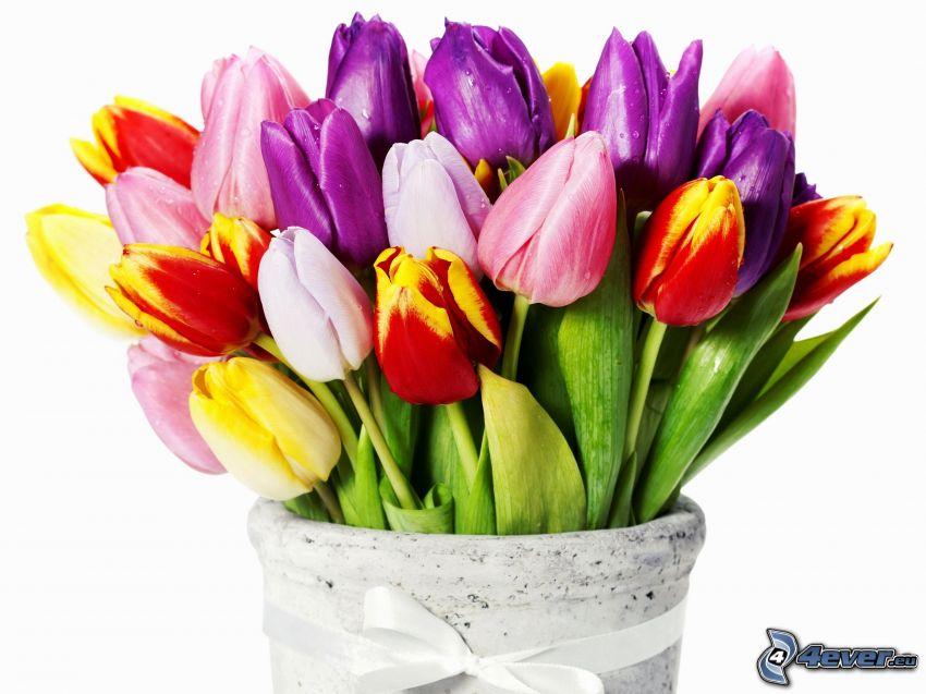 Tulpen, Vase
