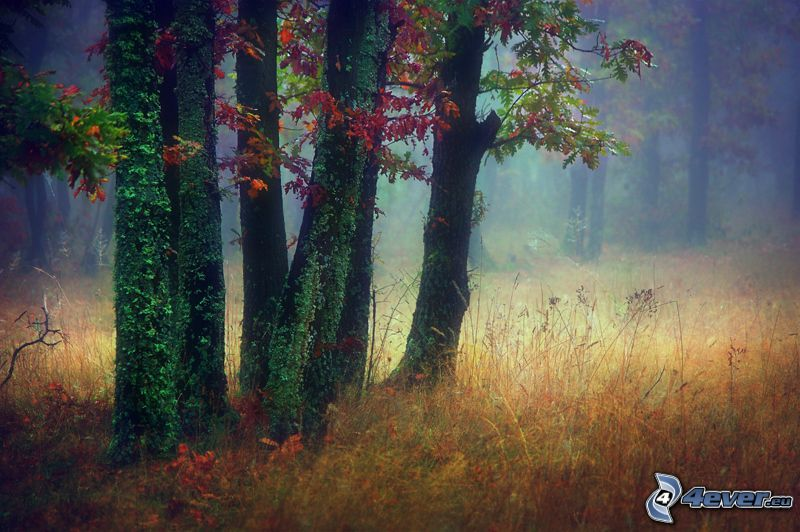 Wald, Bäume, Efeu, trockenes Gras