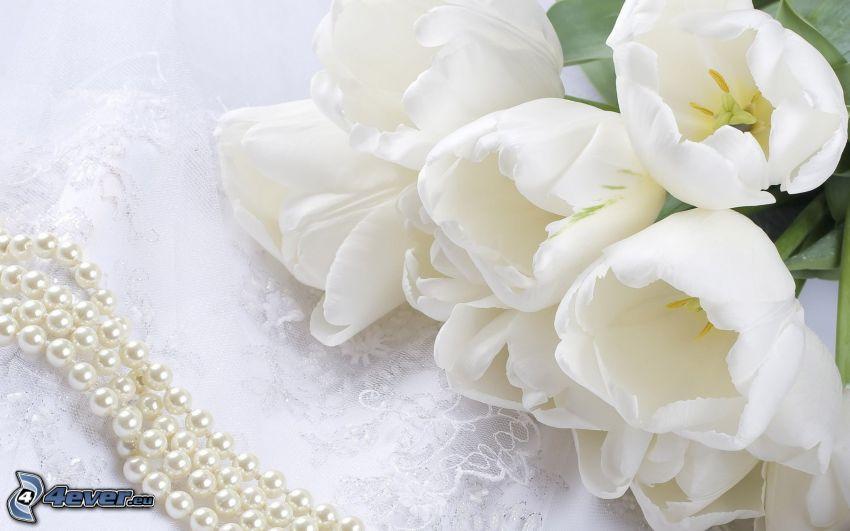 weißen Tulpen