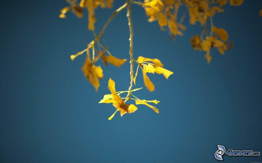 Zweig, gelbes Herbstblatt