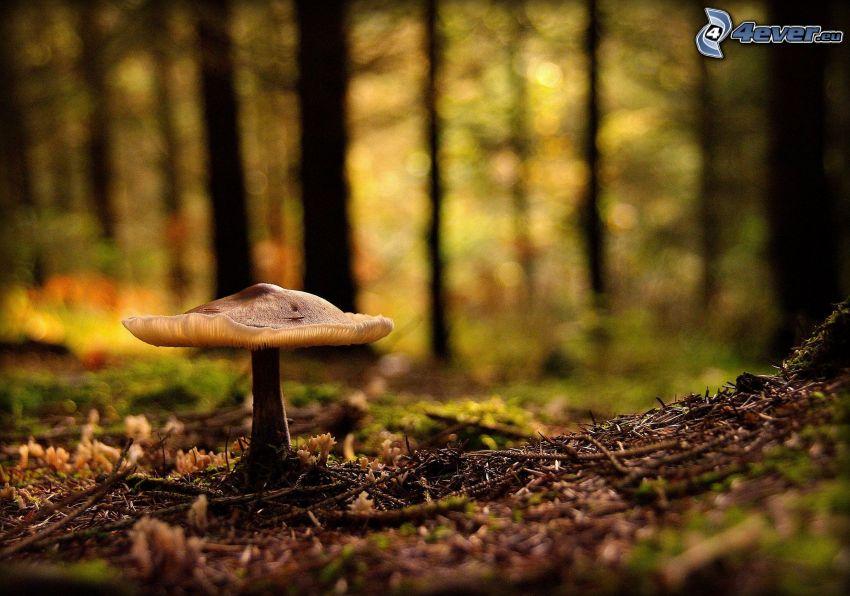 Pilz, Wald