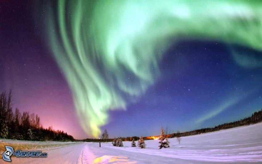 Polarlicht, Wald, Schnee