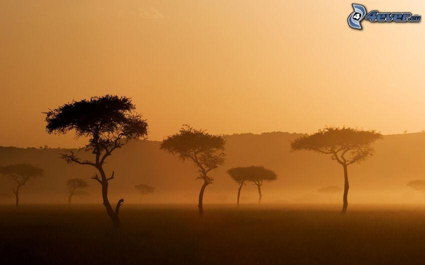 Savanne, Bäume, Boden Nebel