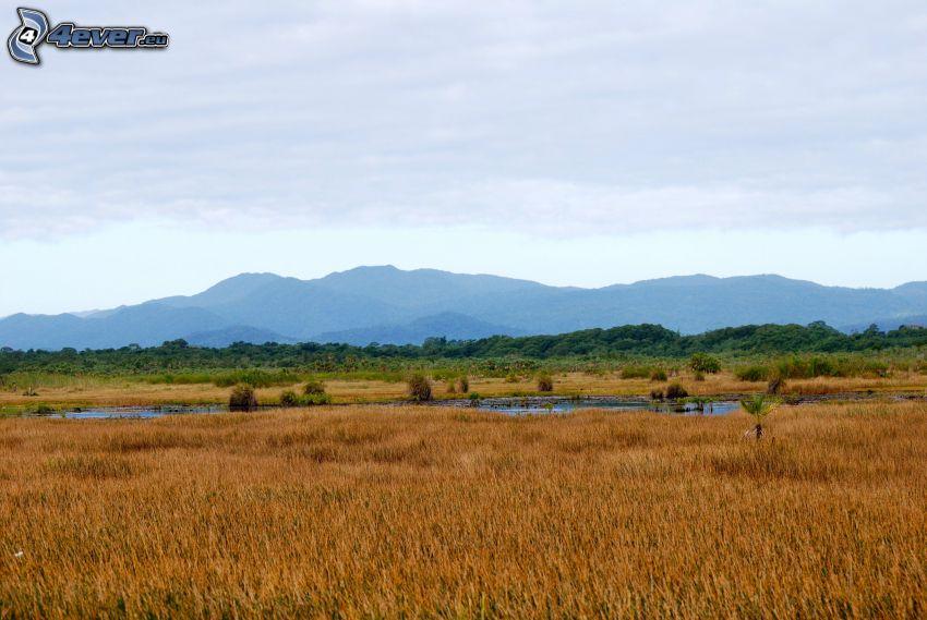 Savanne, Sumpf, Berge, Wald