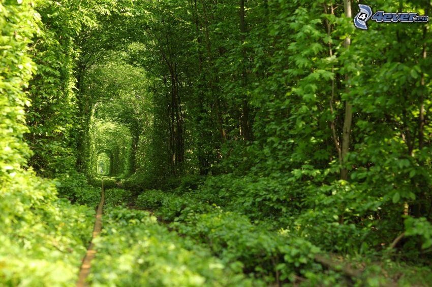 Schienen, Gehweg, grüner Tunnel, grüne Bäume