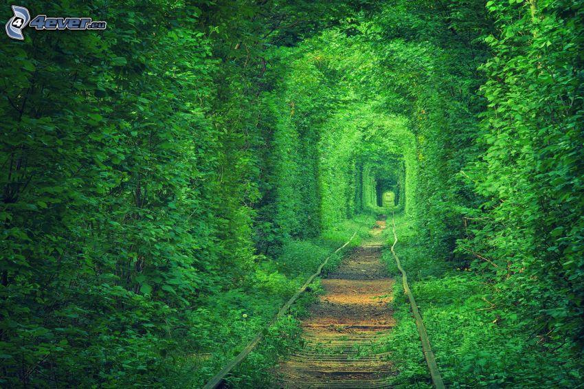 Schienen, grüner Tunnel, grüne Bäume