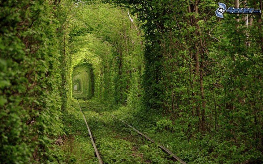Schienen, grüner Tunnel