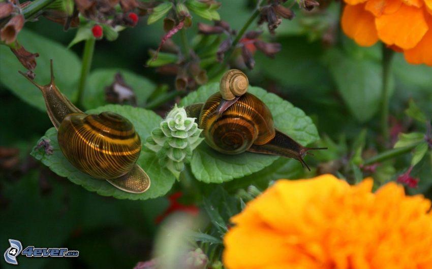 Schnecken, orange Blumen, grüne Blätter