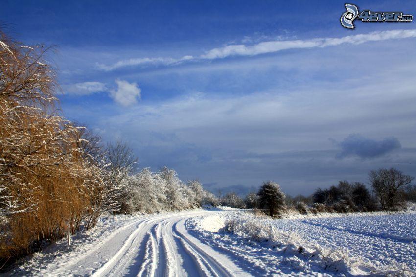 schneebedeckte Straße, Kurve, Bäume