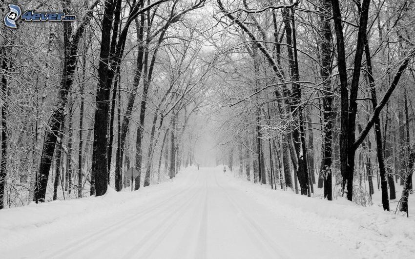 schneebedeckte Straße, verschneite Bäume