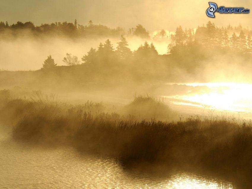 See, Boden Nebel, Tintenfisch