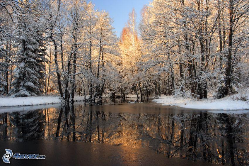 See, verschneite Bäume