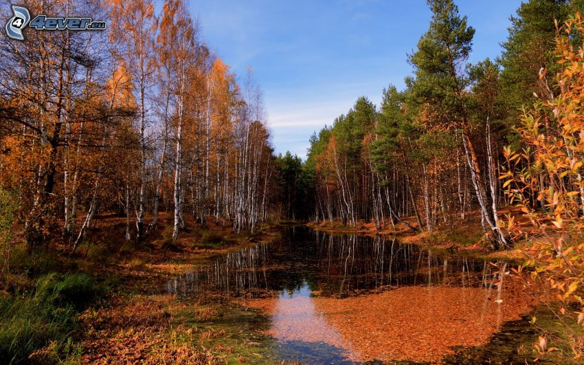 See im Wald, gelbe Bäume