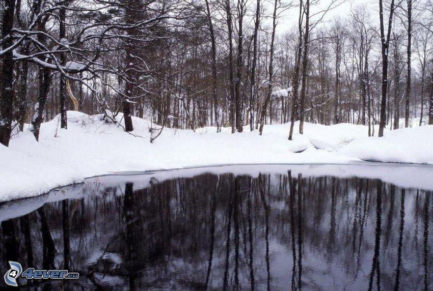 See im Wald, verschneiter Wald