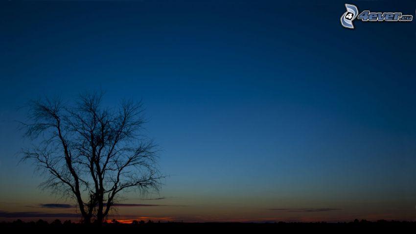Silhouette des Baumes, Abendhimmel