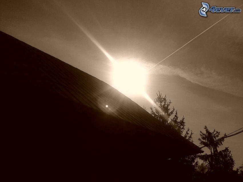 Silhouetten, Dach, Nadelbäume, Sonne, Schwarzweiß Foto, kondensstreifen