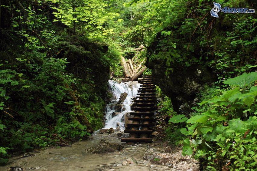 Slowakisches Paradies, Leiter, Wasserfall im Wald
