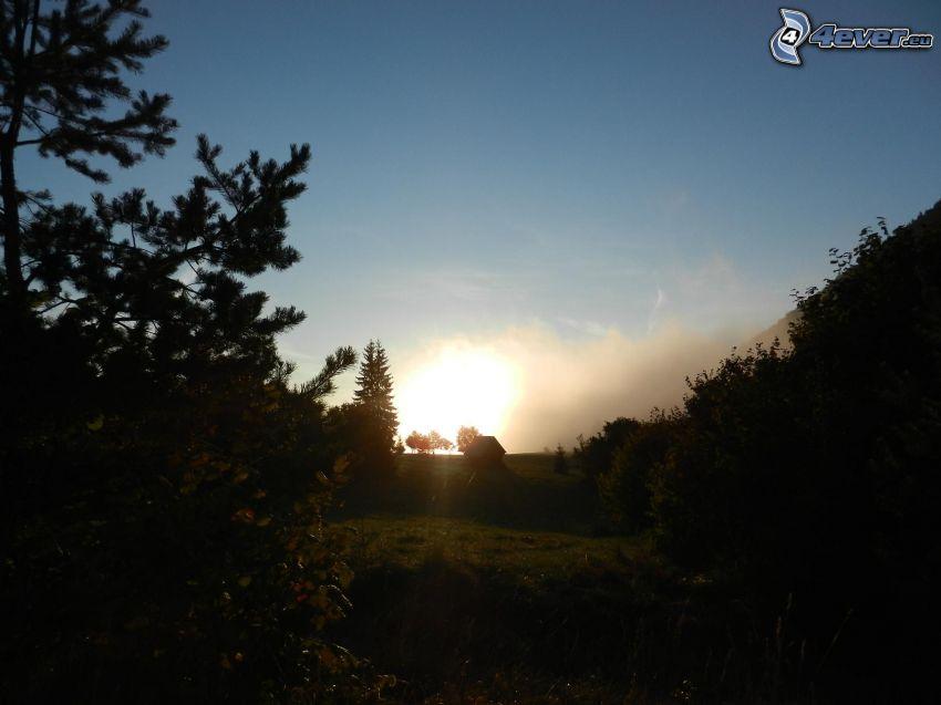 Sonnenaufgang, Bäum Silhouetten, Wiese, Heuboden, Himmel