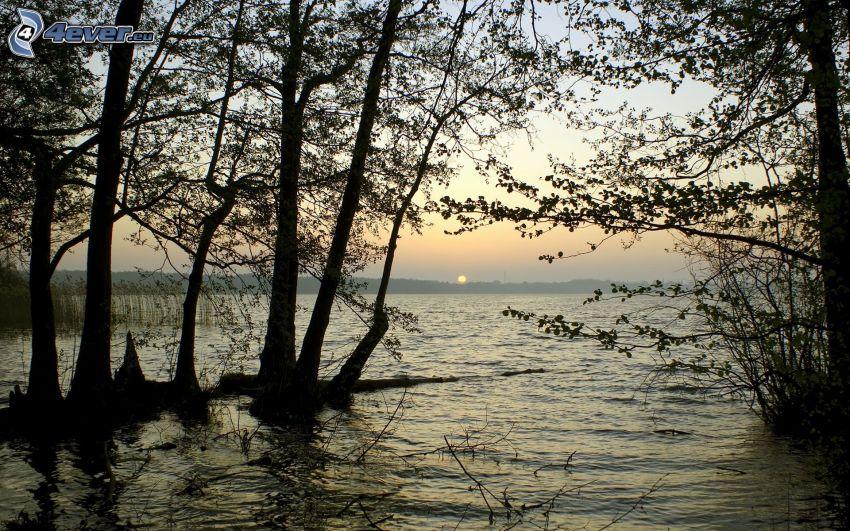 Sonnenuntergang am See, Bäume