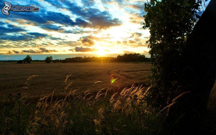 Sonnenuntergang hinter dem Feld, Abendhimmel