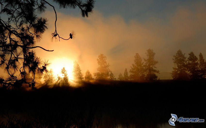 Sonnenuntergang hinter dem Wald, Nadelbäume