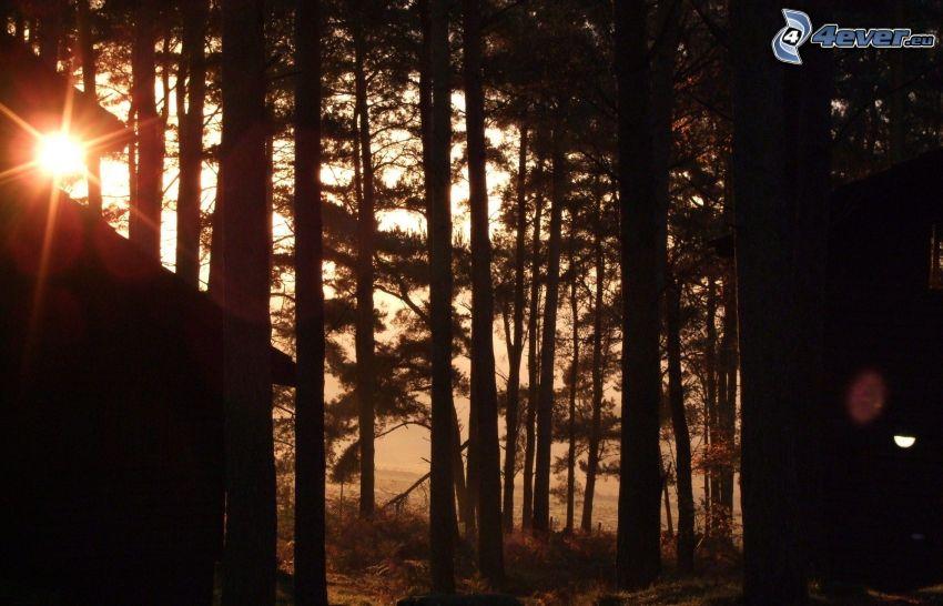 Sonnenuntergang im Wald, Dunkler Wald