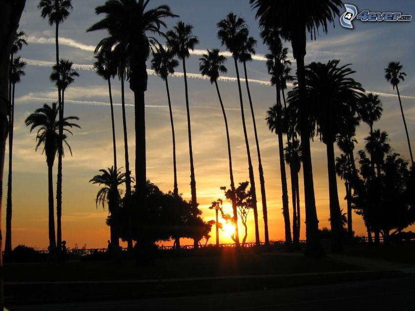 Sonnenuntergang in Santa Monica, Palmen