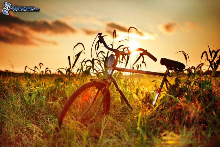 Sonnenuntergang über dem Feld, Fahrrad, hohes Gras