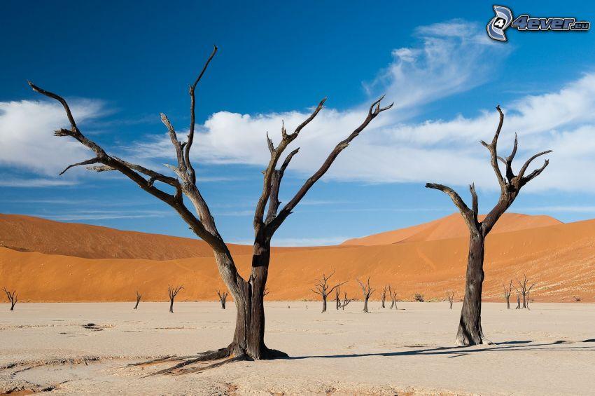 Sossusvlei, trockene Bäume, Sanddüne