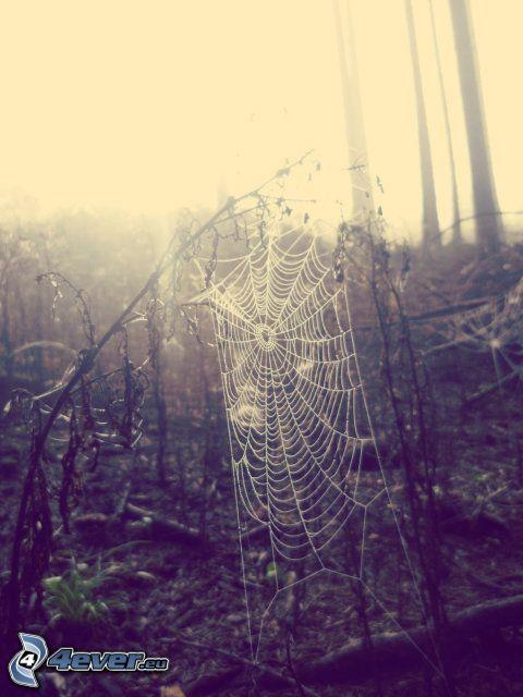 Spinnennetz, Sonnenaufgang