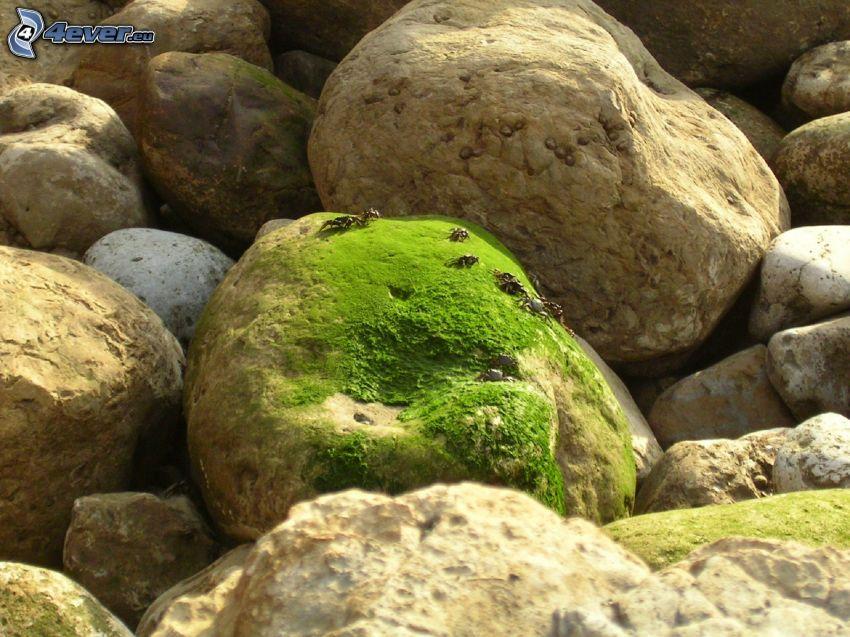 Steine, Krabben