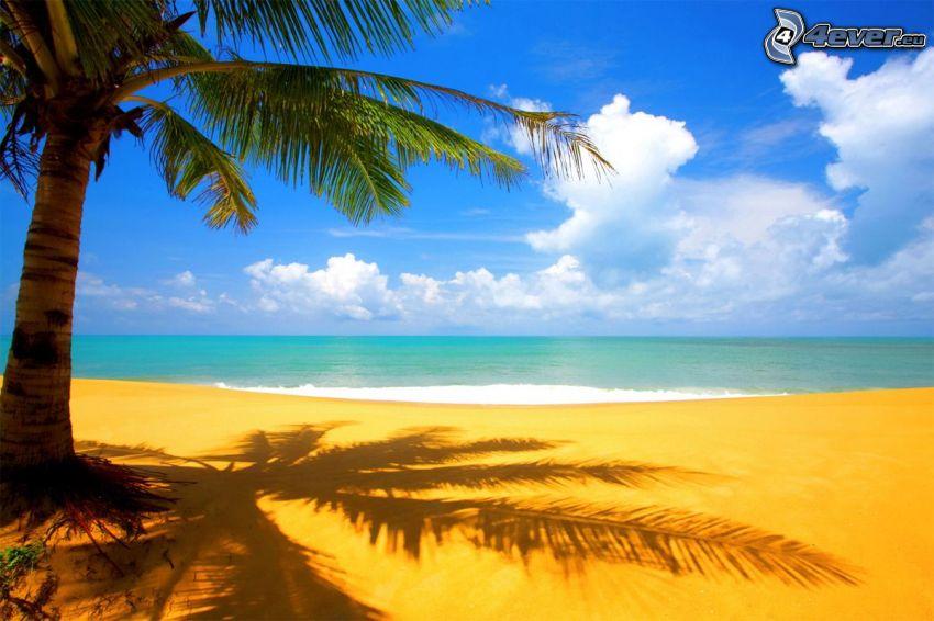Strand, Palme, Meer