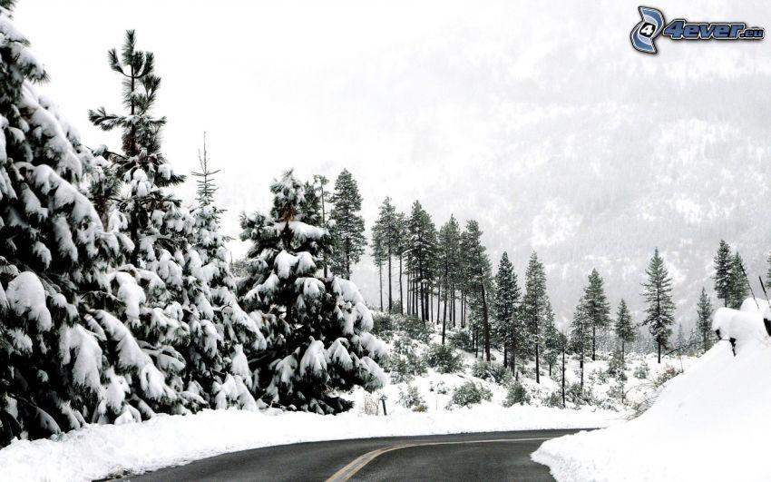 Straße, Kurve, verschneite Landschaft