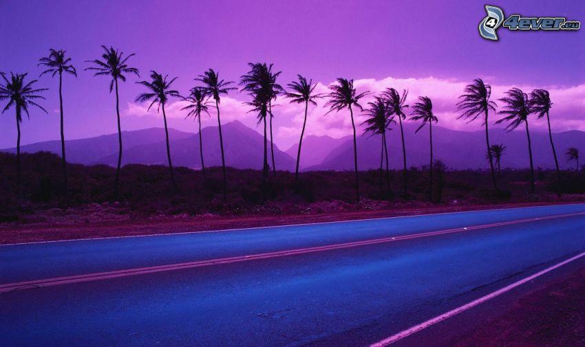 Straße, Palmen, lila Sonnenuntergang