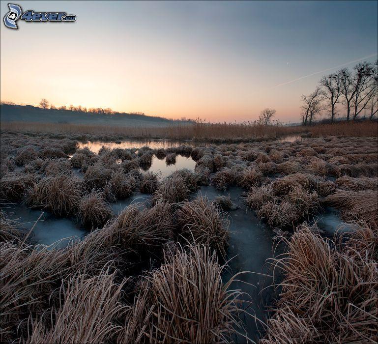 Sumpf, Gras, Vereisung, Abend
