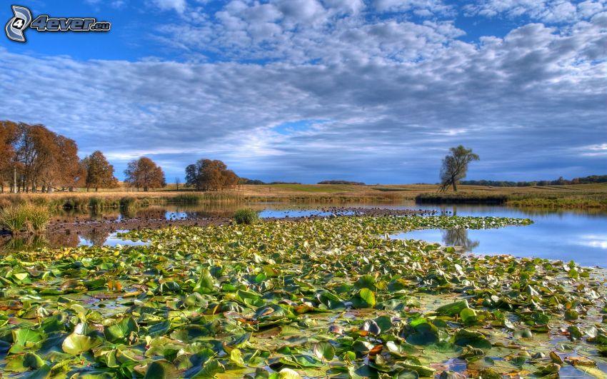 Sumpf, Seerosen
