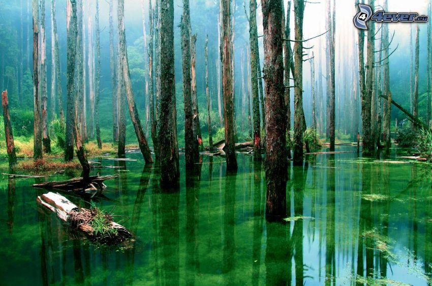 Sumpf, Urwald