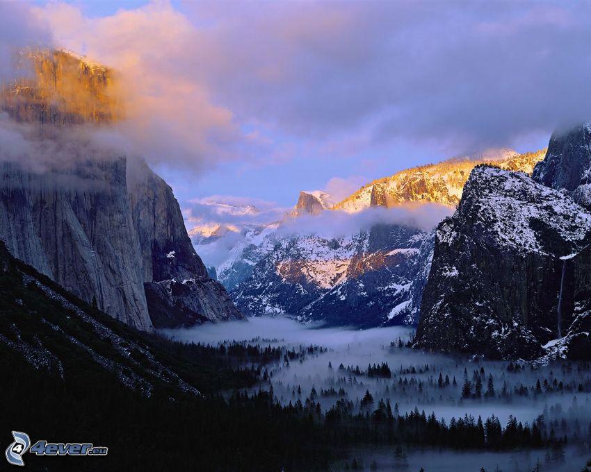 Tal im Yosemite-Nationalpark, Dunkler Wald, Boden Nebel