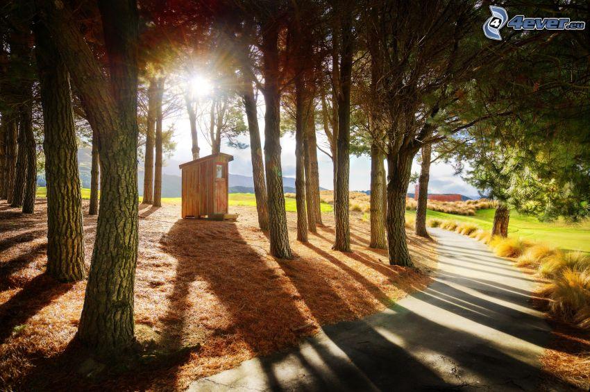 Toilette, Pfad durch den Wald, Sonnenstrahlen im Wald