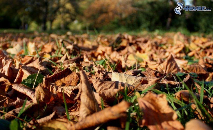 trockene Blätter, Gras