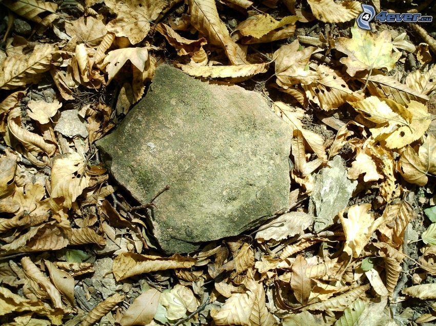 trockene Blätter, Stein, Wald