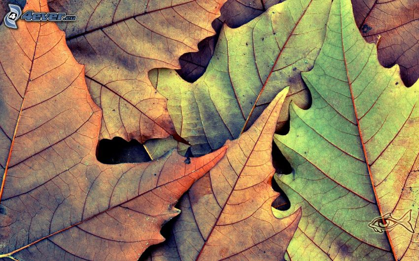 trockene Blätter