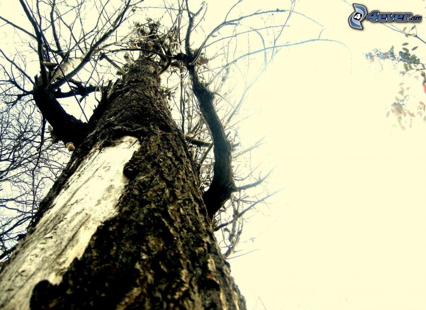 trockenen Baum, Stamm