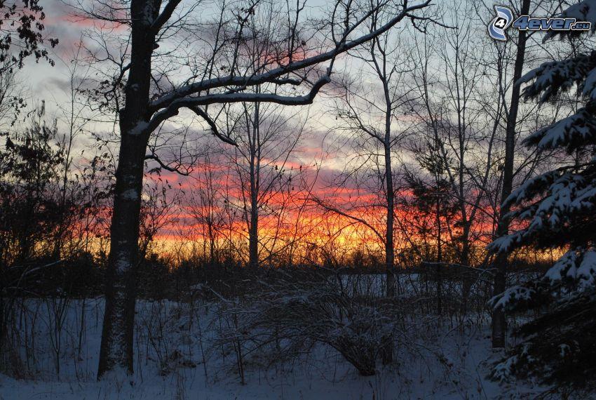 verschneite Bäume, Abendhimmel