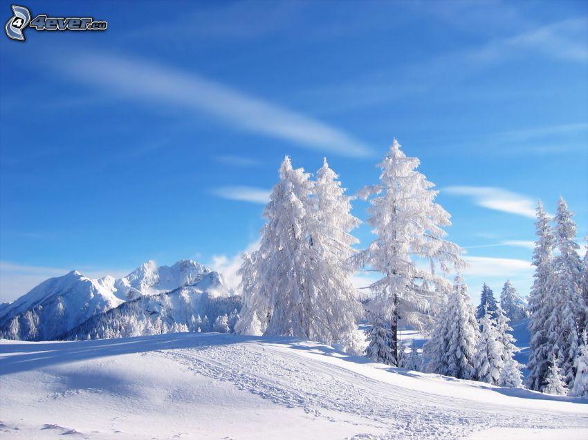 verschneite Bäume, Schnee, Berge