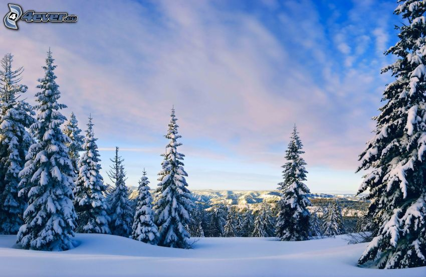 verschneite Bäume, Schnee, Himmel