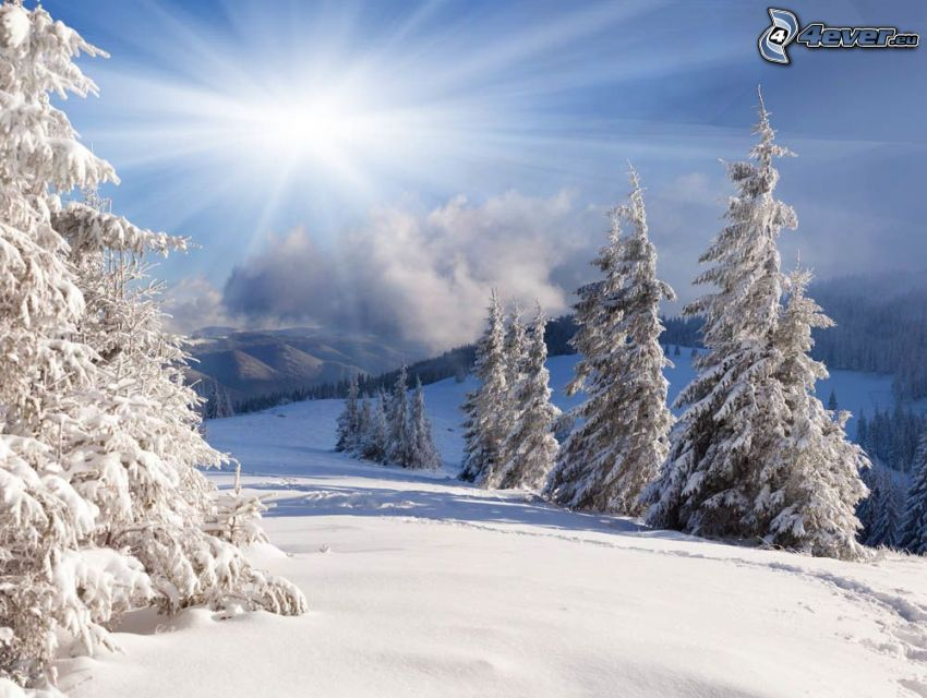 verschneite Bäume, Schnee, Sonne