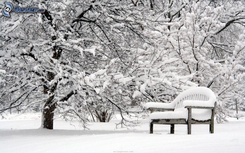 verschneite Bäume, schneebedeckte Bank