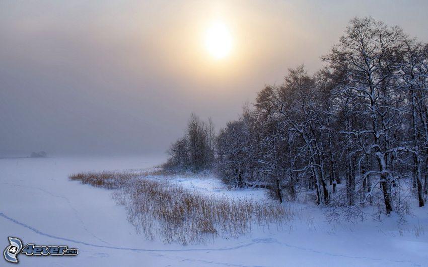 verschneite Bäume, schwache Sonne, Feld, Schnee