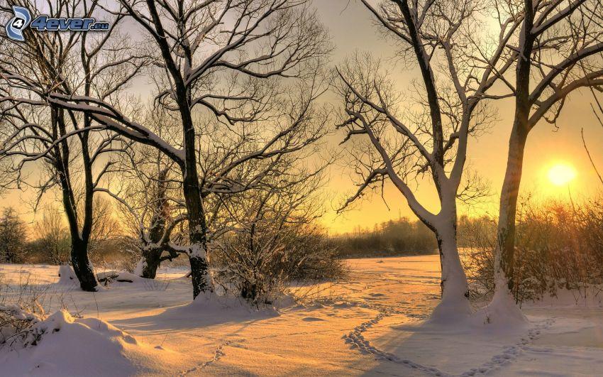 verschneite Bäume, Sonnenuntergang, Spuren im Schnee